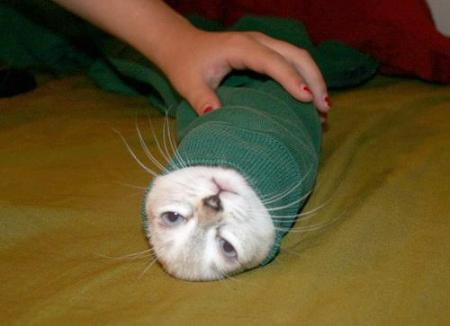 kitten-burrito-in-a-spinach-tortilla